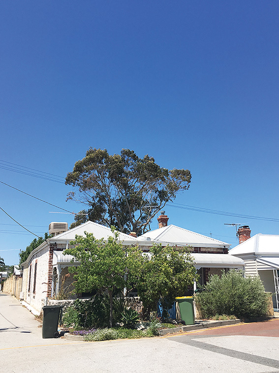 • This gum tree towered over Douglas Street in Freo, but no more. The owners said falling limbs were too dangerous.